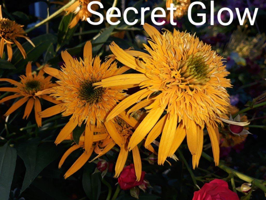 Secret Glow