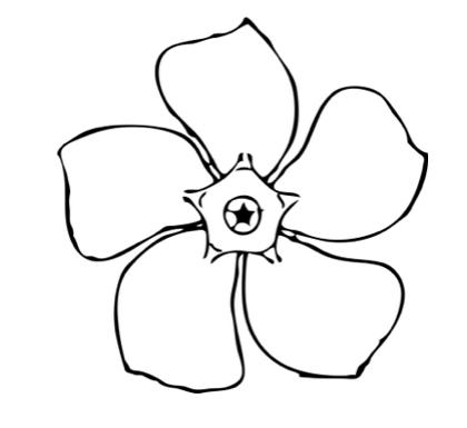 Sudrabsvece, vienkāršā (cimicifuga simplex) Brunette